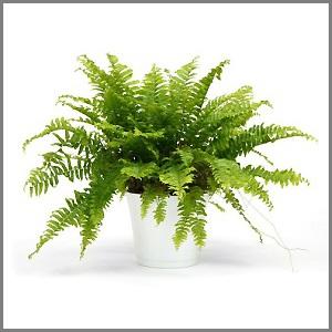 sequelandia-robert-planta